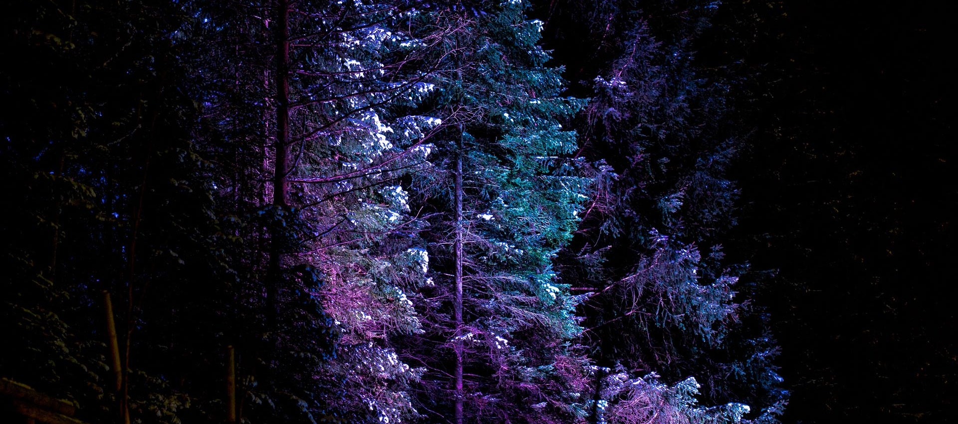 magic_forest_04